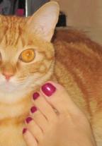 Chubbycat